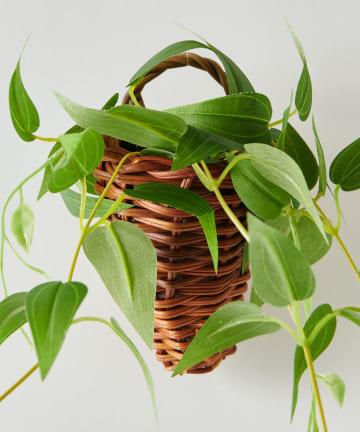 CIAOPANIC TYPY(チャオパニックティピー) 〈ミニ観葉植物・フェイクグリーン〉壁掛け