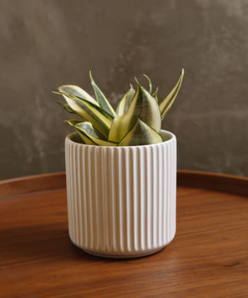 3COINS(スリーコインズ) 【自然と暮らす】ライン柄陶器鉢丸3号