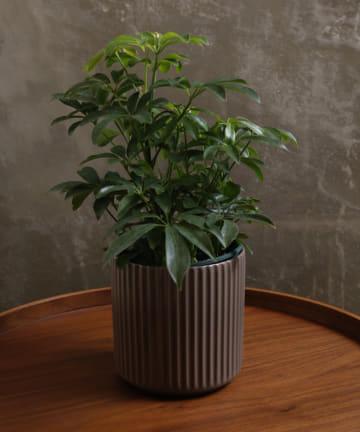 3COINS(スリーコインズ) 【自然と暮らす】ライン柄陶器鉢丸4号