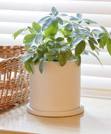 3COINS(スリーコインズ) 【自然と暮らす】セメント鉢丸型:4号用サイズ